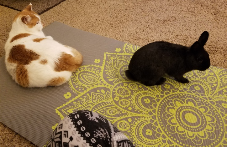 Yoga with Animals.JPG
